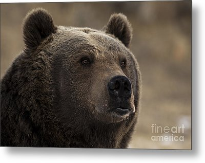 Wild Thoughts Metal Print by Wildlife Fine Art