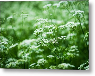 Wild Vegetation Metal Print by Alexander Senin