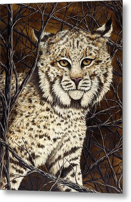 Wildcat Metal Print by Rick Bainbridge