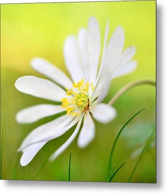 Wildflower Metal Print by Gynt