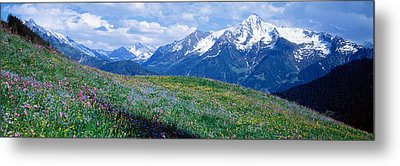 Wildflowers Along Mountainside Metal Print by Panoramic Images