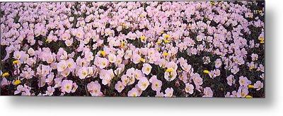 Wildflowers Galveston Tx Usa Metal Print by Panoramic Images