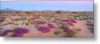 Wildflowers Of Gran Desierto Sand Dunes Metal Print by Thomas Wiewandt