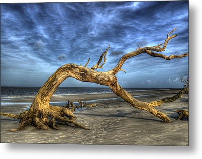 Wind Bent Driftwood Metal Print by Greg and Chrystal Mimbs