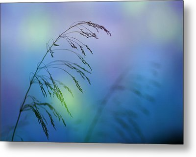 Wind Colors Metal Print by Guido Montanes Castillo
