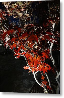 Window Of Sky And Flamed Leaves In My Eye Metal Print by Kenneth James