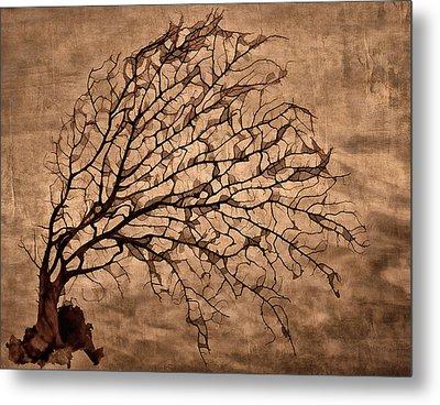 Windowpane Coral Metal Print by Carol Leigh