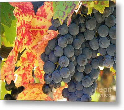 Wine Country Metal Print by France  Art