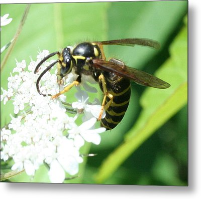 Wings And White Flowers Metal Print by Stephen Melcher