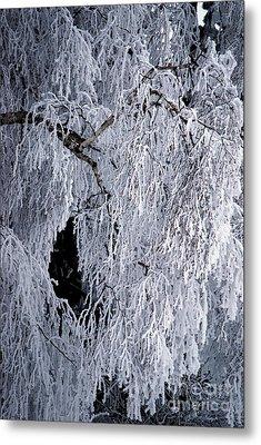 Winter Blanket Metal Print by Sharon Elliott