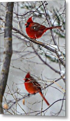 Winter Cardinals Metal Print by Susan Leggett