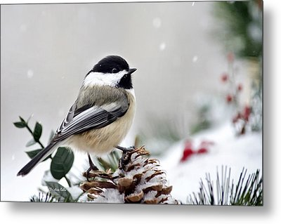 Winter Chickadee Metal Print by Christina Rollo