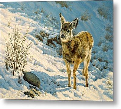 Winter Fawn - Mule Deer Metal Print by Paul Krapf