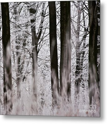 Winter Forest 1 Metal Print by Heiko Koehrer-Wagner