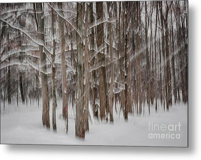 Winter Forest Abstract II Metal Print by Elena Elisseeva