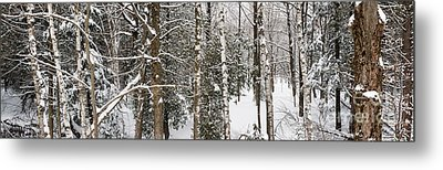 Winter Forest Landscape Panorama Metal Print by Elena Elisseeva