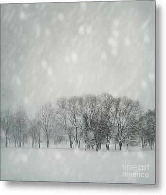 Winter Metal Print by Jelena Jovanovic