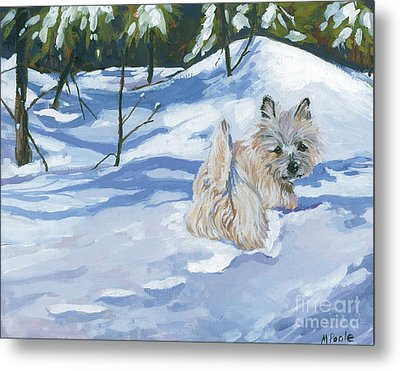 Winter Romp Metal Print by Molly Poole