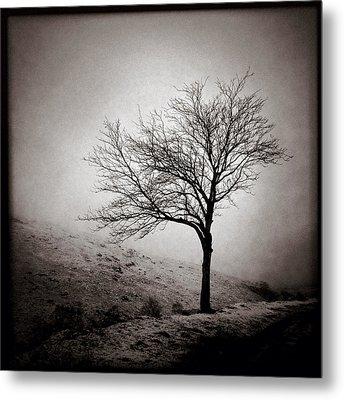Winter Tree Metal Print by Dave Bowman