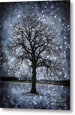 Winter Tree In Snowfall Metal Print by Elena Elisseeva