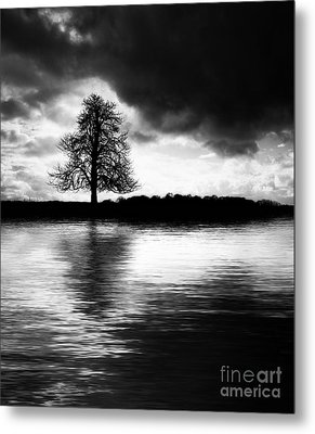 Winter Tree Light   Metal Print by Tim Gainey