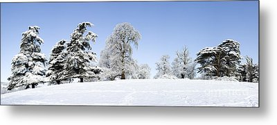 Winter Tree Line Metal Print by Tim Gainey