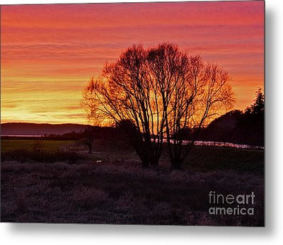 Winter Tree With Red Sky Metal Print by Valerie Garner