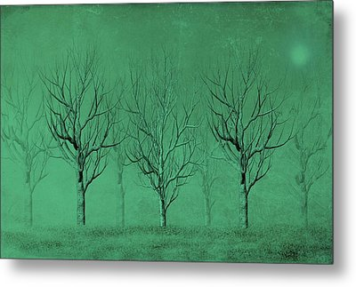 Winter Trees In The Mist Metal Print by David Dehner