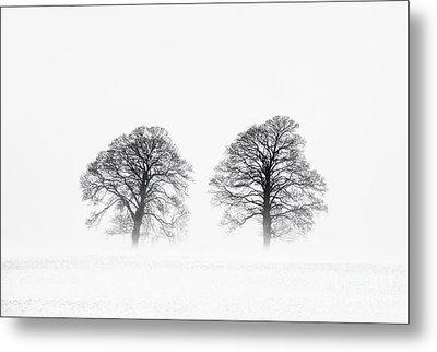 Winter Pine Trees Metal Print by Tim Gainey