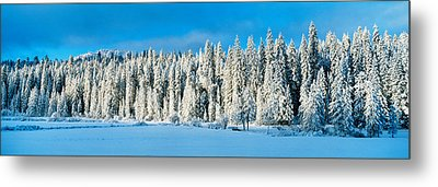 Winter Wawona Meadow Yosemite National Metal Print by Panoramic Images