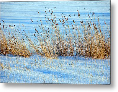 Winter Wheat Metal Print by Aimee L Maher Photography and Art Visit ALMGallerydotcom