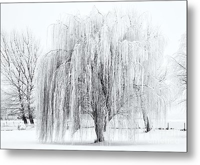 Winter Willow Metal Print by Mike  Dawson