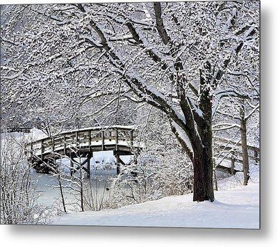 Winter Wonderland Metal Print by Janice Drew