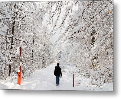 Winterly Forest With Snow Covered Trees Metal Print by Matthias Hauser