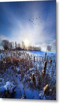 Wintertails Metal Print by Phil Koch