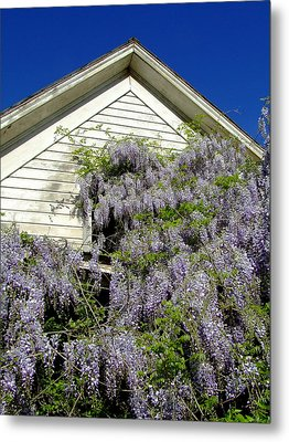 Wisteria Cascading Metal Print by Everett Bowers