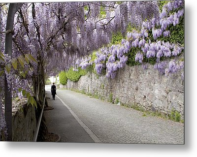 Wisteria Lane Metal Print by Colleen Williams