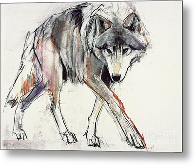 Wolf  Metal Print by Mark Adlington