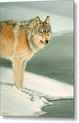 Wolf Portrait-lamar Valley  Metal Print by Paul Krapf