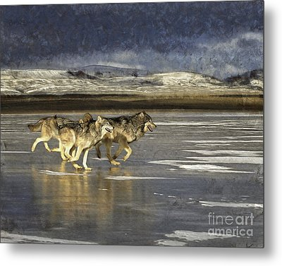 Wolves - Frozen Tundra Metal Print by Wildlife Fine Art