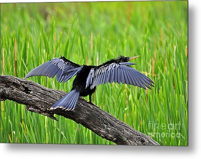 Wonderful Wings Metal Print by Al Powell Photography USA