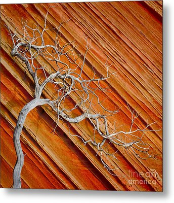 Wood And Stone Metal Print by Inge Johnsson