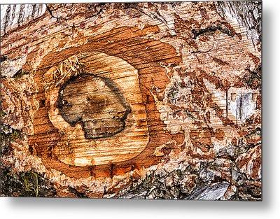 Wood Detail Metal Print by Matthias Hauser