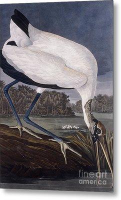 Wood Ibis Metal Print by John James Audubon