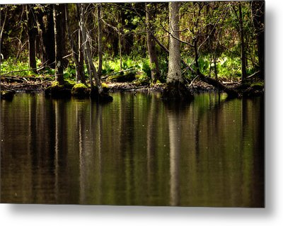 Wooded Reflection Metal Print by Karol Livote