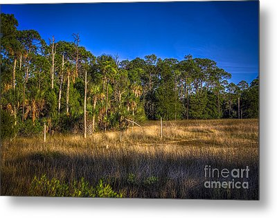 Woodland And Marsh Metal Print by Marvin Spates