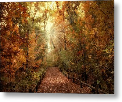 Woodland Light Metal Print by Jessica Jenney