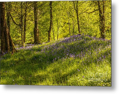 Woodland Of Bluebells Metal Print by Amanda And Christopher Elwell