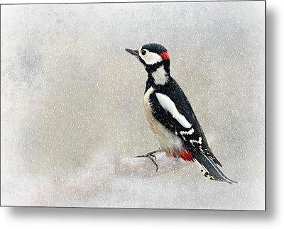 Woodpecker Metal Print by Heike Hultsch