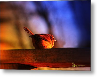 Wren In Early Morning's Light - Featured In In Newbies-nature Wildlife- Comfortable Art Groups Metal Print by EricaMaxine  Price